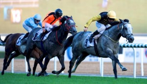 Fils Anges (IRE) Foto cortesia de Dubai Racing Club - Andrew Watkins