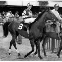Dos grandes: Cañonero II y Bold Forbes