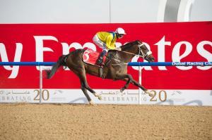 Mubtaahij (IRE) en un hijo de Dubawi (IRE) Foto Cortesía de Andrew Watkins / Dubai Racing Club