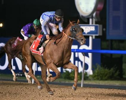 Prince Bishop (IRE) sorprendió al ganar el Dubai World Cup. Foto Cortesia de Dubai Racing Club