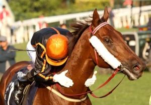 Able Friend (AUS) es actualmente el caballo número uno del mundo Foto Cortesía de Liesl King