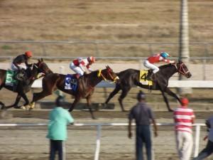 El tresañero invicto Fratello Martino (DOM) derrotando los mayors Foto Cortesía de Carlos Flores (emocionhipica.com)