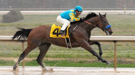American Pharoah (USA) el favorite del Derby Foto Cortesía de David Quinn