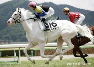 Yukichan (JPN), purasangre puramente blanco. Foto Cortesía de netkeiba