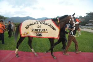 El ganador clásico Manchester (VEN) es una de las cartas venezolanas en el evento. Foto Cortesía de Jorge Yánez