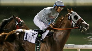 California Chrome (USA) es el favorito para ganar el Dubai World Cup 2016. Foto Cortesia de Kamran Jebreili