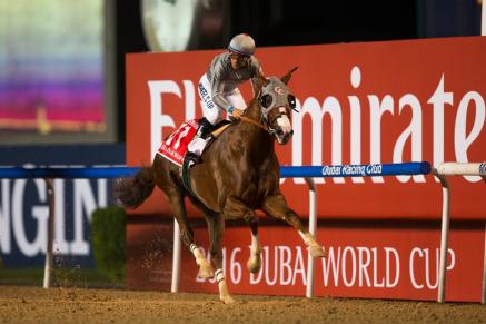 California Chrome (USA) fué dominante en la Dubai World Cup 2016. Foto Cortesia de Dubai Racing Club