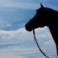 ¿Cuanto tiempo duermen los caballos?