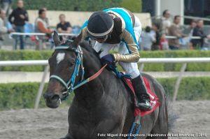 Diamante Negro (MEX) es el único ejemplar en ganar el Handicap de las Américas en tres ocasiones. Foto Cortesía Miguel Angel Espinoza