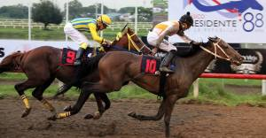 Queen Pearl (USA) a ganado ocho de 23 presentaciones. Foto Cortesía de Hipodromo Presidente Remón