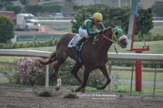 Tamazunchale (MEX) ganando el Stakes Jockey Club Mexicano Foto Cortesía de Miguel Angel Espinoza