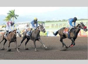 Final del Jamaica Derby. Foto Cortesía de Jamaica Observer