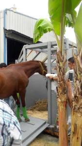 Vencedor (ECU) siendo preparado para partir de Ecuador. Foto Cortesía El Dato