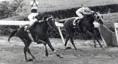Victoreado (VEN) y El Rebelde (PUR) en el Clásico del Caribe de 1966