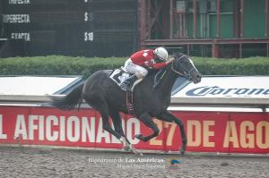 Hunahpu (USA) ganando el Clásico Monarca. Foto Cortesía de Miguel Angel Espinoza