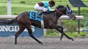 Diamante Negro de dosañero. Foto Cortesía de Miguel Angel Espinoza