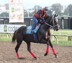 Diamante Negro (MEX) trabajando para el Clásico del Caribe 2013 en Panamá