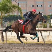 Pegasus 2019 | El Campeón Caribeño Kukulkán (MEX) listo para la batalla