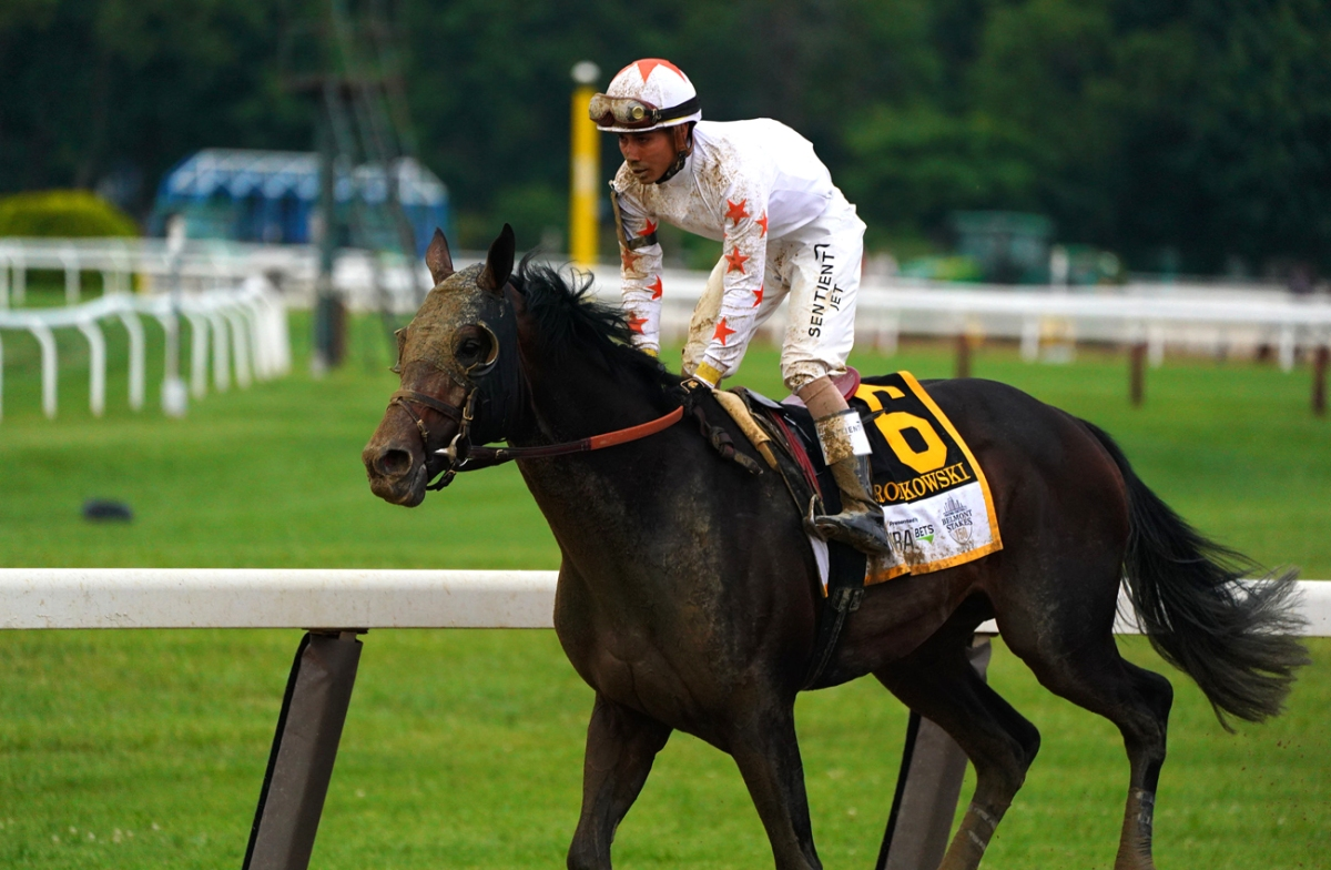 El caballo Gronkowski (USA) a buscar estrellato en Dubai