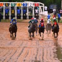 La isla de Tórtola mantiene viva sus carreras de caballos