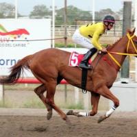 Top10 | Panamá - Los mejores purasangres panameños (2010-2019)