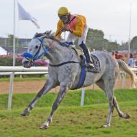 Primera etapa de suscripciones para el Barbados Gold Cup atrae 17 contendores