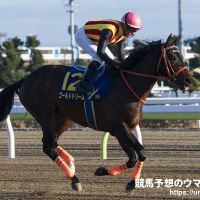 #SaudiCup | Gold Dream (JPN) regresa a Oriente Medio para la Saudi Cup