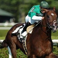 Elites del Caribe | Remarkable News (VEN) - Primer caballo nacido en el Caribe en participar en una Breeders' Cup