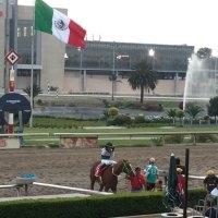 Regresan las carreras de caballos al Hipódromo de las Américas