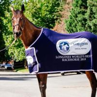 Los caballos pura sangre de mayor dinero ganado en la historia