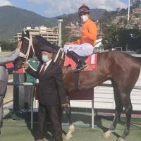 Gran Giocatore (VEN) gana la Condicional Especial para caballos mayores